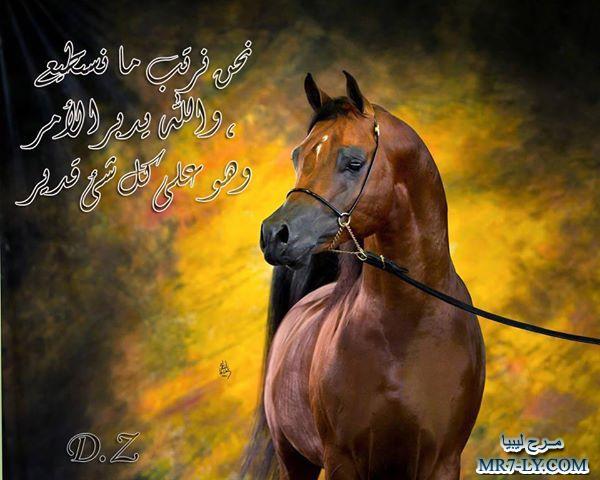 بالصور خيول عربية , صور خلفيات خيل عربى اصيل 6353 2