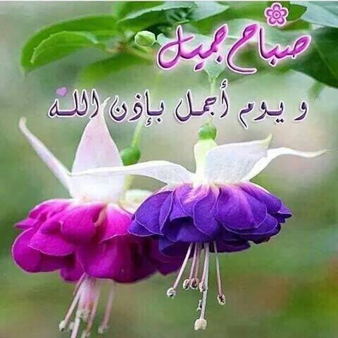 بالصور صباح الخير وكل الخير , صور مكتوب عليها صباح الخير 6387 6