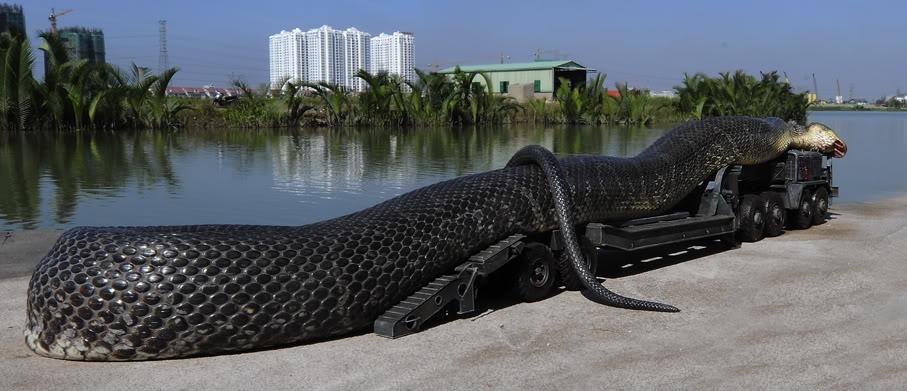 صوره اكبر ثعبان في العالم , بالصور اطول ثعبان فى العالم