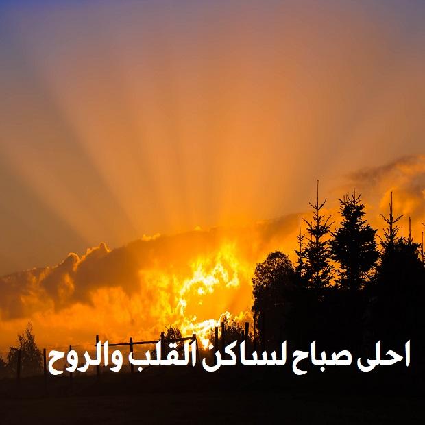 صورة اجمل ماقيل عن الصباح , عبارات عن الصباح