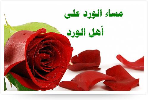 صورة صور مساء الورد , صور مكتوب عليها مساء الورود