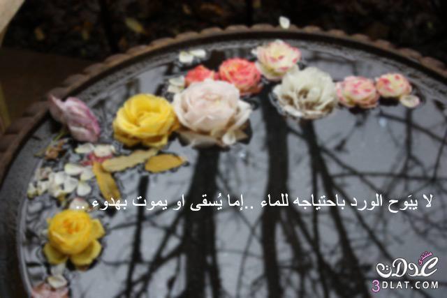صوره صور عن الدنيا , امثال عن الدنيا بالصور