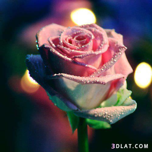 بالصور صور جميلة جدا , خلفيات رائعة الجمال 6499 4