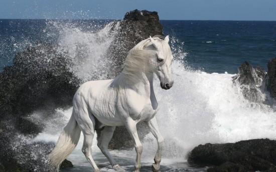 بالصور خيول عربية اصيلة , صور خيول عربيه روعه 6510 7