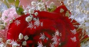 خلفيات ورد , اروع خلفيات زهور
