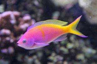 صور معلومات عن الاسماك , اشهر المعلومات عن الاسماك