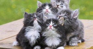 صوره اجمل صور قطط , اجمل وارق الحيوانات الاليفه القطط