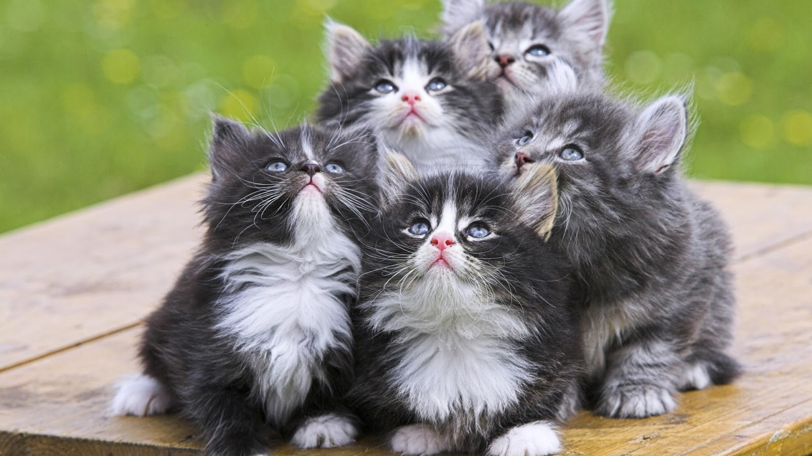صورة اجمل صور قطط , اجمل وارق الحيوانات الاليفه القطط