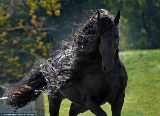 بالصور اجمل حصان في العالم , صور لاجمل الاحصنه بالعالم 4882 2