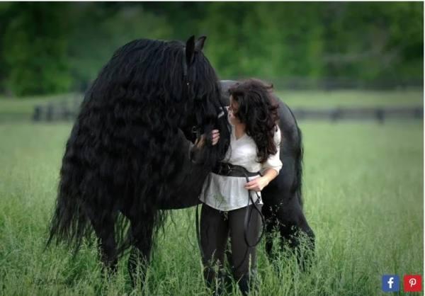 بالصور اجمل حصان في العالم , صور لاجمل الاحصنه بالعالم 4882 4