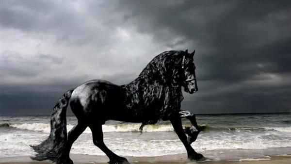 بالصور اجمل حصان في العالم , صور لاجمل الاحصنه بالعالم 4882 9