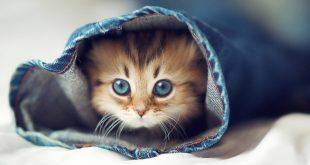 بالصور صور حيوانات اليفه , اجمل الحيوانات صغيرة الاليفه 4890 11 310x165