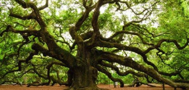 بالصور صور اشجار , صور مختلفة للشجر 4928 3