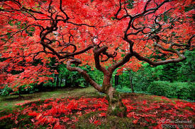بالصور صور اشجار , صور مختلفة للشجر 4928 4