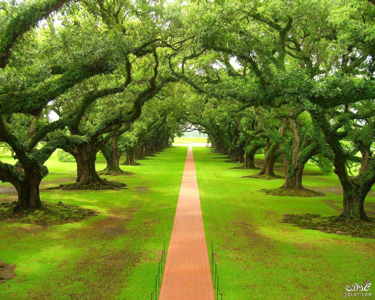 بالصور صور اشجار , صور مختلفة للشجر 4928 5