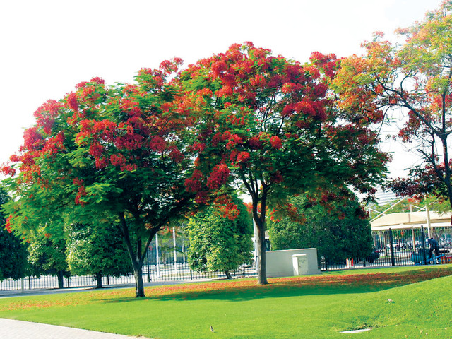 بالصور صور اشجار , صور مختلفة للشجر 4928 8