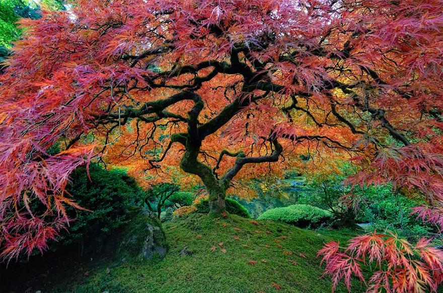 صور صور اشجار , صور مختلفة للشجر