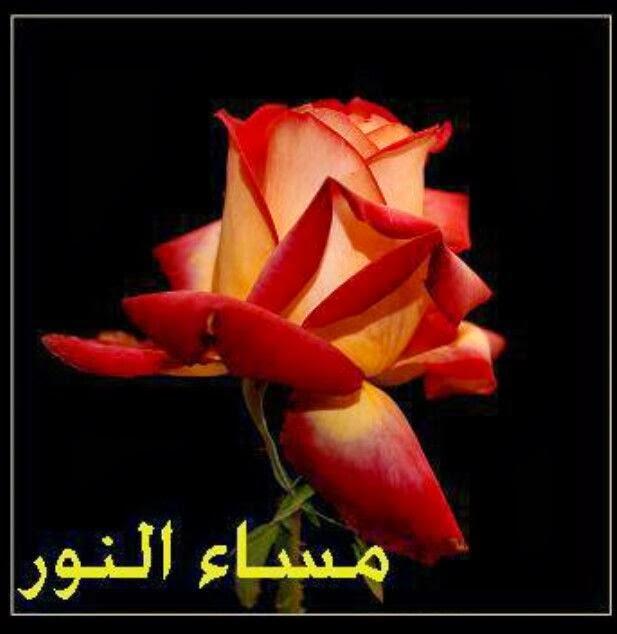 بالصور صور مساء الفل , صور مساء الخير 4991 9