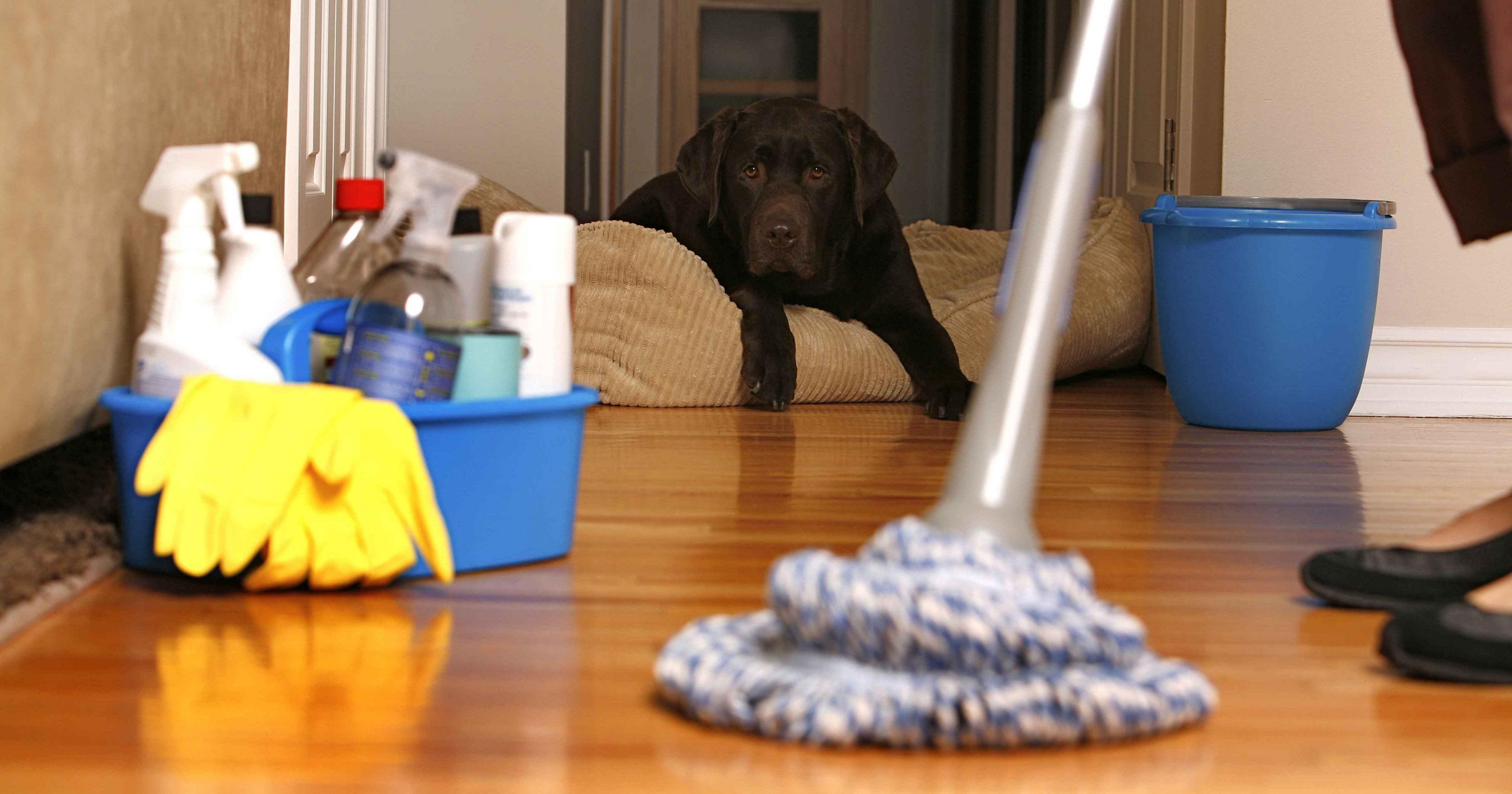 بالصور تنظيف منازل , اهميه تنظيف المنزل 5083 6