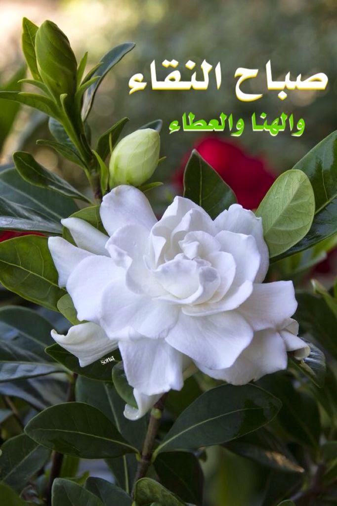 بالصور اجمل صباح الخير , اجمل صور لصباح الخير 5110 4