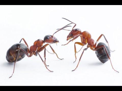 صورة معلومات عن النمل , اعرف اكثر عن النمل