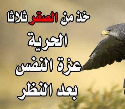 بالصور حكم اليوم , اجمل الاقوال و اجدد الحكم 5269 8