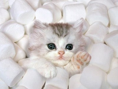 بالصور قطط جميلة , اجمل القطط 5859 10