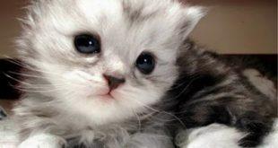 صوره قطط جميلة , اجمل القطط