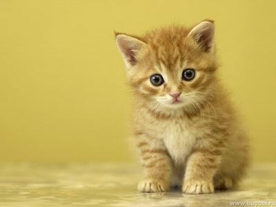بالصور قطط جميلة , اجمل القطط 5859 2