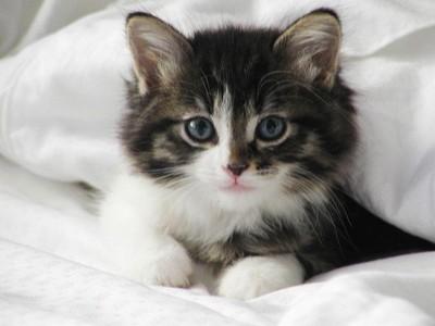بالصور قطط جميلة , اجمل القطط 5859 3