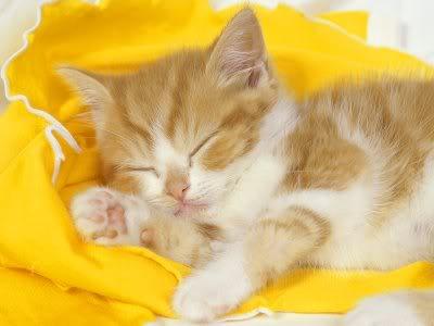 بالصور قطط جميلة , اجمل القطط 5859 4
