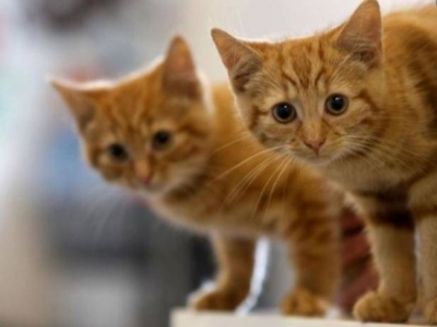 بالصور قطط جميلة , اجمل القطط 5859 5