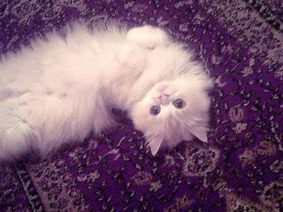 بالصور قطط جميلة , اجمل القطط 5859 6