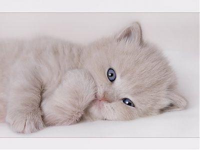 بالصور قطط جميلة , اجمل القطط 5859 7