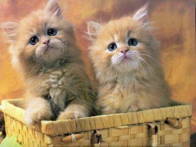 بالصور قطط جميلة , اجمل القطط 5859 9
