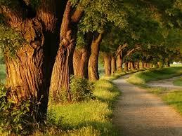 بالصور صور عن الطبيعة , اجمل صورة للطبيعة 5869 3