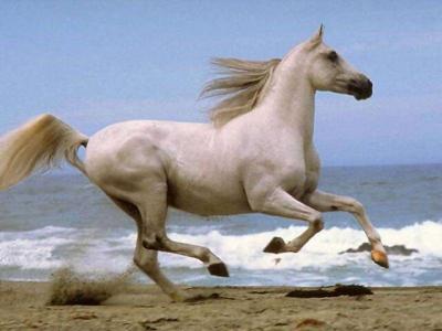بالصور اجمل صور خيول , اجمل صورة للخيول 5898 10