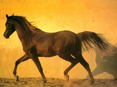 بالصور اجمل صور خيول , اجمل صورة للخيول 5898 12