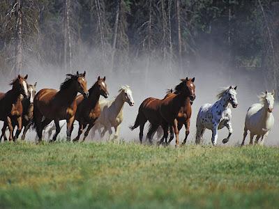 بالصور اجمل صور خيول , اجمل صورة للخيول 5898 13