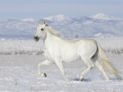 بالصور اجمل صور خيول , اجمل صورة للخيول 5898 20