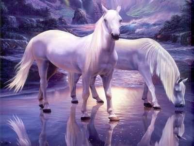 بالصور اجمل صور خيول , اجمل صورة للخيول 5898 21