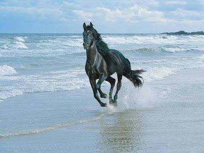 بالصور اجمل صور خيول , اجمل صورة للخيول 5898 22
