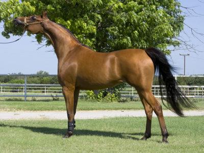 بالصور اجمل صور خيول , اجمل صورة للخيول 5898 24