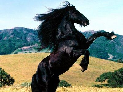 بالصور اجمل صور خيول , اجمل صورة للخيول 5898 7