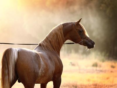 بالصور اجمل صور خيول , اجمل صورة للخيول 5898 8