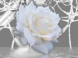 بالصور صور ورود جميلة , اجمل صورة للوردة 5904 6