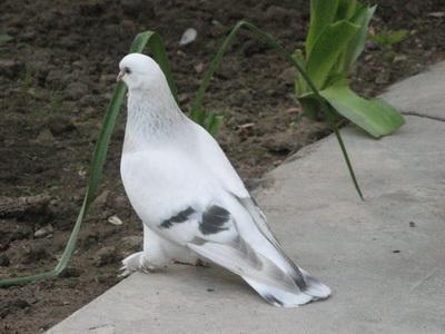 بالصور صور طيور , صورة للطير 5907 10