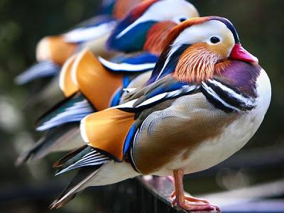بالصور صور طيور , صورة للطير 5907 2