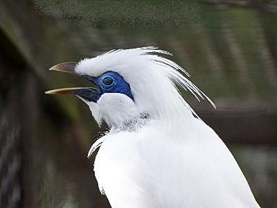 بالصور صور طيور , صورة للطير 5907 3