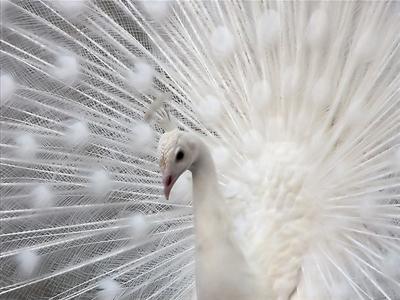 بالصور صور طيور , صورة للطير 5907 6